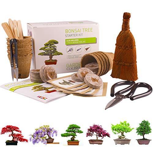 KIT ALBERO BONSAI. COMPLETO per coltivare 6 splendidi alberi a casa Kit di giardinaggio per bonsai che include 3 strumenti bonsai superiori, qualità premium, set regalo per giardinaggio