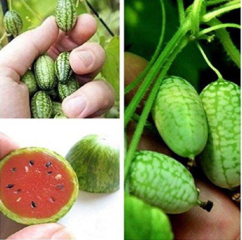Heiße 10Pcs Cucamelon Mini-Wassermelone Samen Miniatur Obst Pflanzenhausgarten-BD57