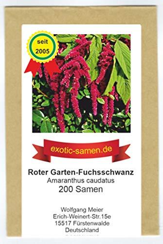 Amaranthus caudatus - Roter Garten-Fuchsschwanz - 200 Samen
