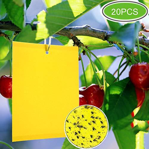 ZOORE 20 Stück Pflanzenschnäpper, Eco Doppelseitige, gelbe, klebrige Fallen für mehrere Fliegende Insekten - Gewächshausfliegen, Blattläuse, Pilzmücken, Blattbergleute und weiße Fliegen