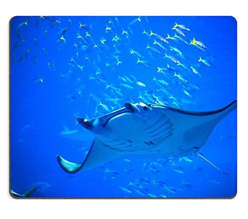 MSD Natural Rubber Gaming Mousepad IMAGE ID: 30896110 Manta ray in Okinawa Churaumi Aquarium