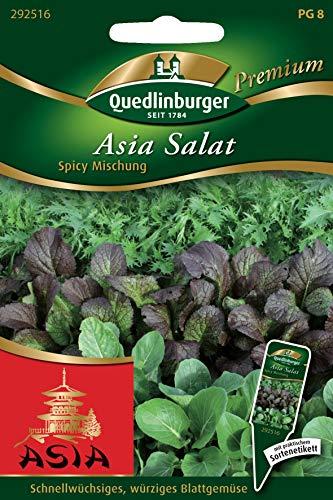 Asia Salat, Brassica campestris, ca. 800 - 1000 Samen