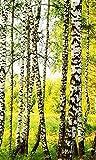 Vlies Fototapete BIRKENWALD 150 x 250 cm | Vliestapete - Wandtapete für Wohnzimmer Schlafzimmer...