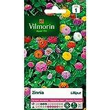 Vilmorin - Zinnia Lilliput varié