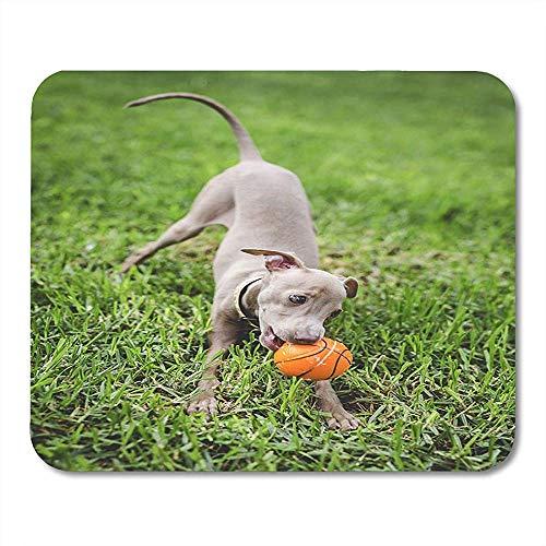 Muis Pads Bruin Aanhankelijke Kleine Italiaanse Greyhound In Het veld Plezier Met Kostuums Dier Canine Mouse Pad Voor Notebooks Matten