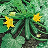 Shop Meeko Kings Seeds - zucchine precoce Gem F1-15 Semi
