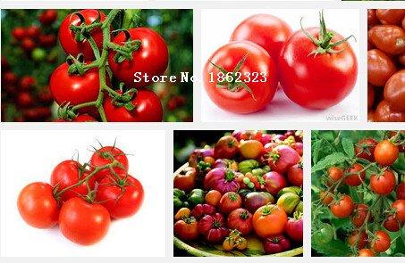 Tomates semences graines 100pc Tiesto chère fruits légumes Mini Rouge douce Graines santé \
