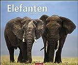 Elefanten. Wandkalender 2020. Monatskalendarium. Spiralbindung. Format 55 x 46 cm
