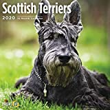 2020 Scottish Terriers Wall Ca...