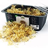 CiboCrudo Alghe Irish Moss Essiccate Crude, Raw, Addensante Naturale – 50gr – Alga Rossa Disidratata Cartilaginosa, Muschio Irlandese, Ricca di Iodio, Etichette in Italiano