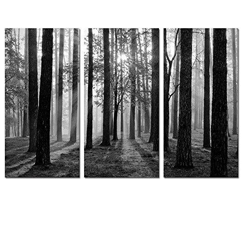 Visual Art Decor 3 Pieces Black and White Sunshine Foggy Forest Trees Canvas Prints