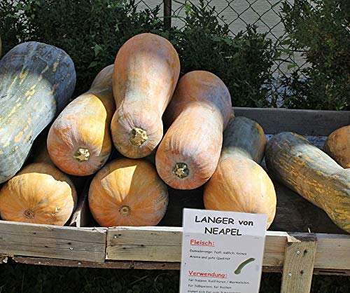 Bobby-Seeds Kürbissamen Lunga di Napoli Portion