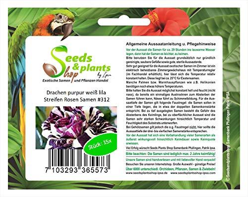 Stk - 15x Drachen purpur Weiß Lila Streifen Rosen Pflanzen - Samen #312 - Seeds Plants Shop Samenbank Pfullingen Patrik Ipsa
