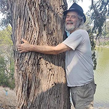 Tree to Hug