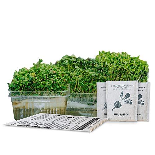 Self-Watering Microgreens Growing Kit - 3 Micro Greens from Organic Non-GMO Seeds - Window Garden or...