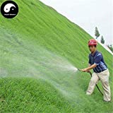 PLAT FIRM Germinazione dei semi: 500pcs: Acquistate Evergreen Zoysia Japonica semi di piante Slope Protezione Prato Erba