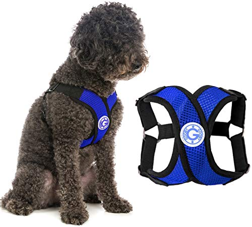 Gooby Dog Harness - Blue, Small - Comfort X Step-in Small Dog Harness with Patented Choke-Free X Frame - Perfect on The Go No Pull Harness for Small Dogs or Cat Harness