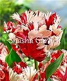 Sump Nouveau 100pcs graines de fleurs de tulipes pour un beau jardinage (pas des bulbes de tulipes) rouge blanc