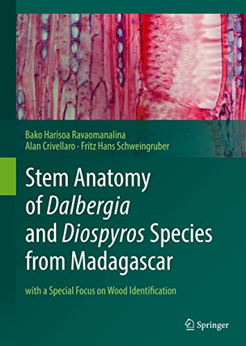 Stem Anatomy of Dalbergia and Diospyros Species from Madagascar: with a Special Focus on Wood Identification (English Edition)