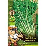 Semillas ecológicas de Achicoria Diente De Leon