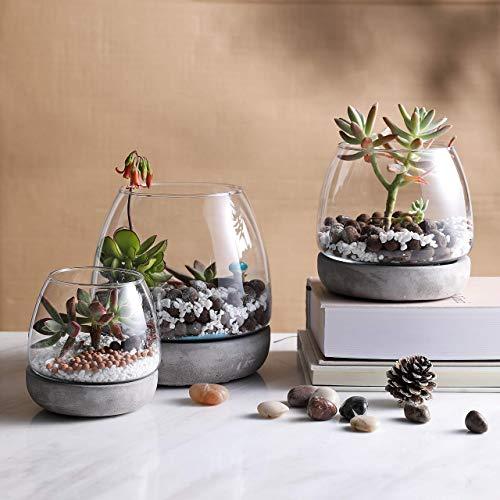 KMwares Glass Decorative Terrarium/Plant Vase/Candle Holder/Bowl with Unique Concrete/Cement Base - Set of 3 - Perfect for Home Accent or Tabletop Decor or Succulent Planting