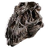 Interior Decoration The Tyrannosaurus Rex Dinosaur Skull Specimen Resin Skulls