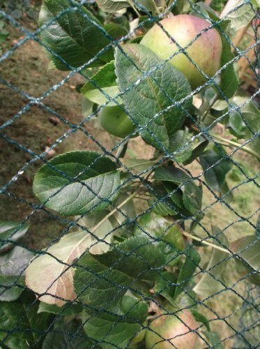 Nutley's Kitchen Gardens 10 x 10m Woven Bird Net - Green