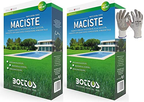 Maciste, Bottos sementi per prato tappeto erboso ideale per zone aride 2kg per 80mq (2pz x 1kg) * inclusi GUANTI VF UTILIA IN NITRILE/NYLON *