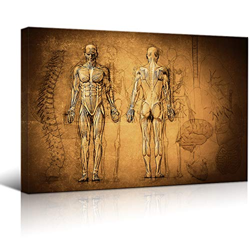 Human Muscular System and Skeleton Print Wall Art