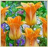 Tulpenzwiebeln-Spektakuläre Greenleaf Strange Flower Bio-Pflanze Hofdekoration Seltene Arten Duftender Valentinstag-Orange,5 Zwiebeln