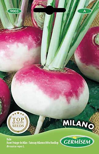Germisem Milano Semillas de Remolacha 10 g (EC9003)