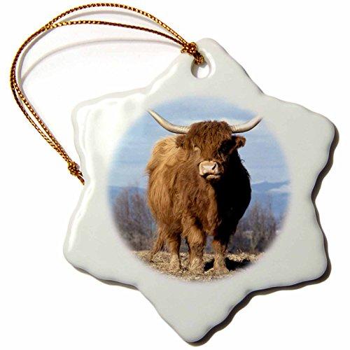 3dRose ORN_93472_1 USA, Oregon, Multnomah County Highland Cow-US38 BJA0154-Jaynes Gallery-Snowflake Ornament, Porcelain, 3-Inch