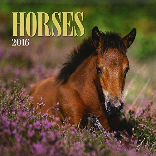 Turner Horses 2016 Mini Wall Calendar, 7 x 7 inches (8950006)