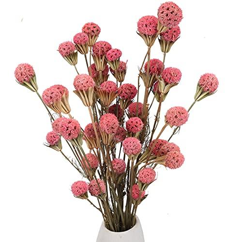 XHXSTORE 40PCS Ramo de Flores Secas Craspedia Flores Secas Naturales Rosas para Florero Ramo DIY Arreglo Floral Mesa Decorativa Boda en Casa