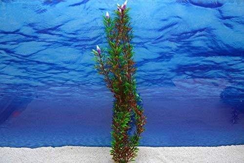 Amtra Bicolour XXL 46cm künstliche Pflanze Dekoration Aquarium