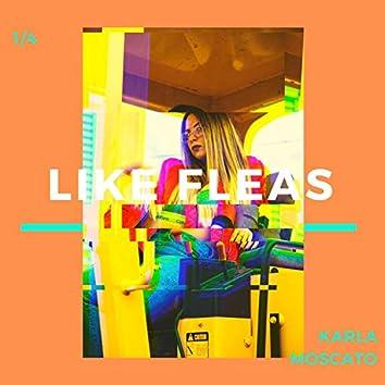 Like Fleas