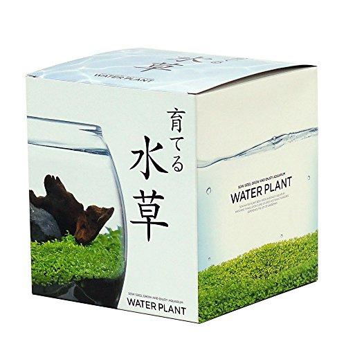 聖新陶芸 育てる水草 L 約18.2x16.5x16.4cm GD-813
