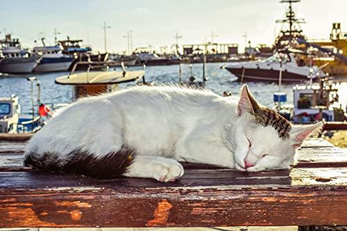 IUWAN Gato durmiendo en el Muelle - Rompecabezas para Adultos 1000 Piezas DIY Puzzle Niños Paperen Juguetes 38 * 26cm
