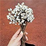 HHTC Flor, flor artificial, artificial y secas Flores, arreglos florales, Ramo de flores naturales secas, flor Soluciones punto de venta for los accesorios de la boda y la decoración del hogar, 100g /