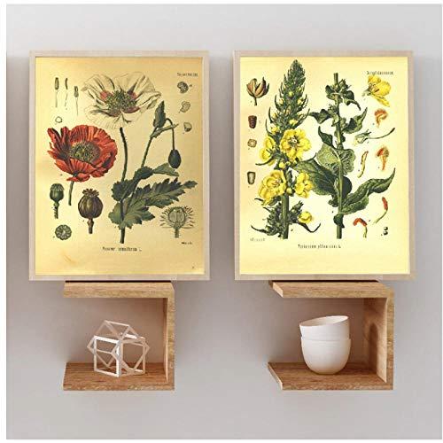 Geneeskrachtige planten Encyclopedie Posters Home Decor 50x70x2Pcscm Geen Frame