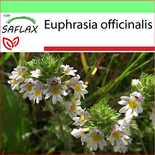 SAFLAX - Garden to Go - Heilpflanzen - Augentrost - 200 Samen - Mit Tontopf, Untersetzer, Anzuchtsubstrat und Dünger - Euphrasia officinalis