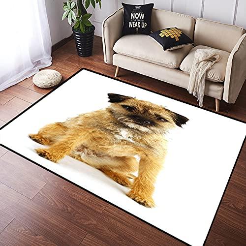 NANITHG Alfombra Salon Grandes Pelo Corto Border Terrier inglés Joven y Activo Suave Antideslizante Alfombras Dormitorio Modernas Lavables para Sala Habitación Infantil 100x120cm