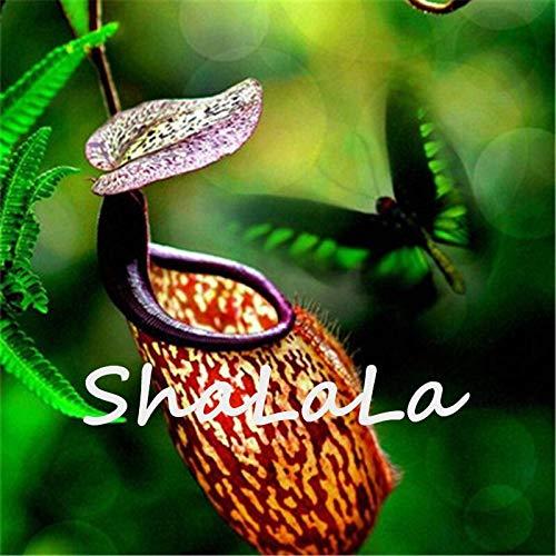 Gemischt: Neu Eine Packung 50 Stücke Seltene Nepenthes Samen Blumensamen Fliegenfalle Balkon Topf Bonsai Pflanzen Samen Bonsai Fleischfressende Pflanzen Samen
