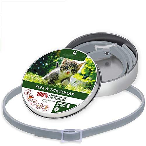 SFBBBO Collar Perro Anti pulgas garrapatas Insectos Mosquitos 8 Meses de protección Impermeable Collar de Perro de Larga duración Personalizado Cachorro Gato Collares para Mascotas Collar Cat1