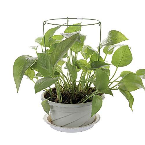 LAMF 3 Stück Pflanzenstützen Käfige Garten Pflanzenstützen Ringe für Topfpflanzen Schwerlastwachsen durch Blumen und Pflanzen, unterstützt runde Pflanzenstützen