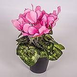 artplants.de Kunstblume Alpenveilchen im Topf, 12 Blüten, rosa, 25cm - Mini Kunstblumen - Dekoblumen klein