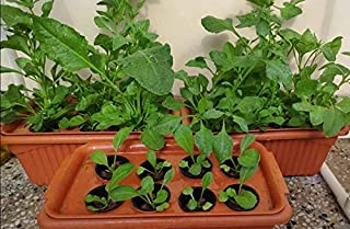 Acttive Hydroponics Planter 48