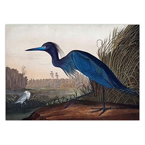 Puzzle 1000 Piezas Audubon Vintage Bird Art Picture American Heron Swan Rose Spoonbill Puzzle 1000 Piezas Animales Educativo Divertido Juego Familiar para niños adultos50x75cm(20x30inch)
