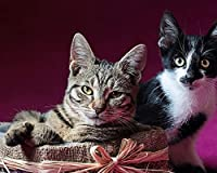 数字で描くDIY油絵猫カップルダウンキャンバス結婚式の装飾アート写真ギフト絵画キャンバスアクリル絵の具 カスタマイズ可能 40x50cmフレームなし