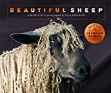 Beautiful Sheep:Portraits of champion breeds (Beautiful Animals) (English Edition)